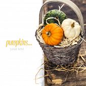 pumpkins over white background (with easy removable sample text)