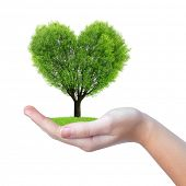 growing tree in the shape heart in hand isolated on white