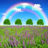 Spring meadow with trees and rainbow