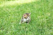 Cute little kitten on grass outdoors