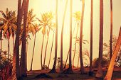 Palms plantation