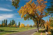 Autumn road leading through the trees