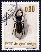 Postage Stamp Yugoslavia 1966 Stag Beetle, Insect