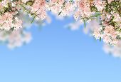 Pink flowers on blue sky