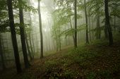 Fog in a ethereal green forest