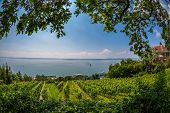 View Over Lake Constance