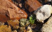 Clear sea water, algae and stones