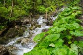 Fast mountain river in a forest