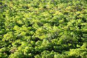 Background - Brachystegia Woodlands from Top of Black Rock, Kasungu National Park, Malawi, Africa