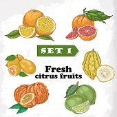 Set 1 Fresh Citrus Fruits Of Orange, Grapefruit, Citron, Lime, Bitter Orange And Kumquat
