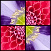 Square Collage Of Dahlia And Poppy