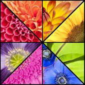 Rainbow Collage Of Flowers In Square Frame