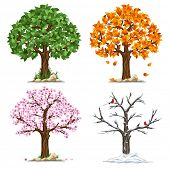 stock photo of tree leaves  - Tree in four seasons  - JPG