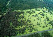 Big Island aerial shot - rain forest