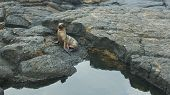 Baby Sea Lion in Galapagos Islands