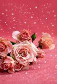 Beautiful Flowers Pink Roses