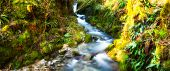 Mountain River With Green Leaves