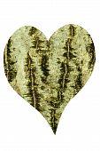Heart Of Bark Of Common Walnut
