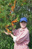 Girl Picking Hippophae In The Field