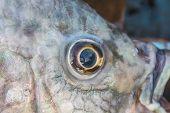 Fish Eye Close Up