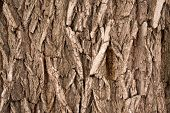 Wood Bark Background