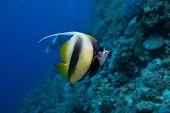 fish and scuba diver
