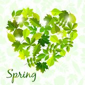 spring background from leaves .