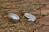 pic of trout fishing  - Macro photo of an artificial fly for fly fishing on a wood background - JPG