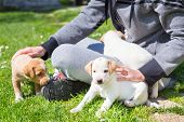 stock photo of little puppy  - Mixed - JPG
