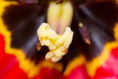 stock photo of single flower  - flowers macro single flower close - JPG