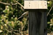 pic of tit  - Photography of a tit in a bird house - JPG