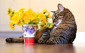 picture of yellow tabby  - domestic pet tabby cat and spring yellow flowers dandelions - JPG