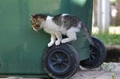 pic of baby cat  - Kitten - JPG