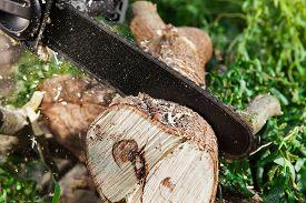 stock photo of cutting trees  - man  - JPG