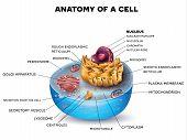 Постер, плакат: Cell Structure