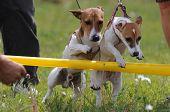Treinamento de cães jovens