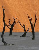 Fire Dune