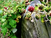 Постер, плакат: Berries On A Headstone