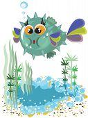 Funny ball fish