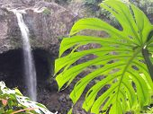 Rainbow Falls  Hilo Hi The Big Island