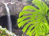 Rainbow Falls  Hilo Hi The Big Island