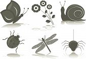Isolated icons of insects, vector illustration