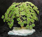 image of peridot  - Peridot crystal gemstone tree plant bush willow - JPG