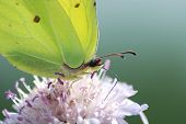 The Butterfly On A Flower