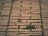Cobblestone Paving Footpath With A Bunch Of Grass,  Concrete Cobbles. Texture Of Old Stone Path poster