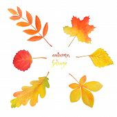 Abstract Watercolor Illustration With Autumn Foliage For Decorative Design. Autumn Set: Colorful Lea poster