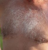 Hairy Chest Of A Man. Part Of The Body poster