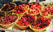 Summer Harvest. Red Ripe Berries. Juicy Berries From Garden. Buy Fresh Fruits. Organic Berries. Heal poster