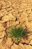 Plant In The Cracked Soil