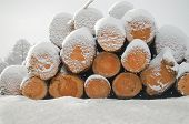 Pile Of Cut Wood Logs Under White Winter Snow. Logs Under The White Fresh Snow poster